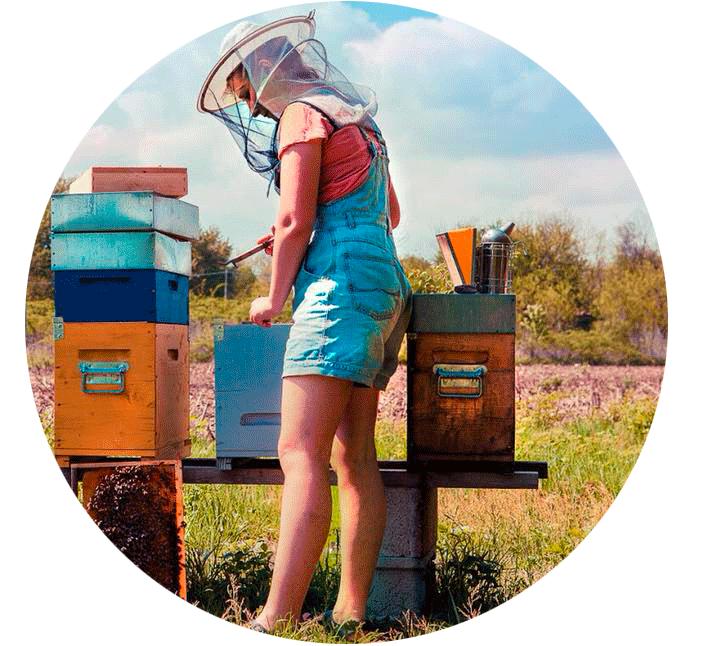 apiaria_perchè-il-nostro-miele-è-così-buono